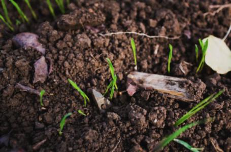 8 afaceri în agricultură în care merită să investești