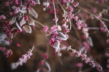 Care este floare protectoare a persoanelor născute în lunile de iarnă?