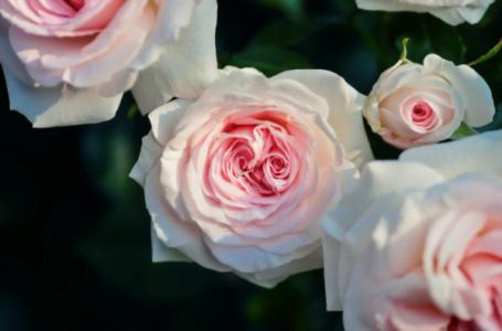 Cum îți influențează florile starea de spirit