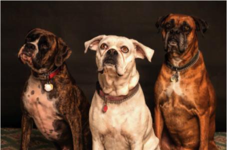 Rase de câini potrivite pentru tine